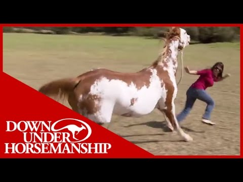 horsemanship training frightened dominant horse