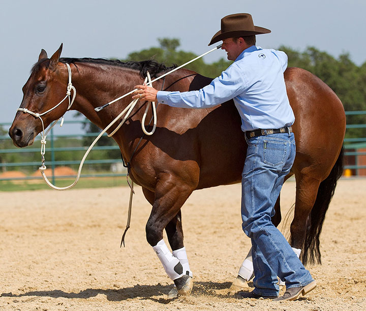 Stand behind the horse's drive line