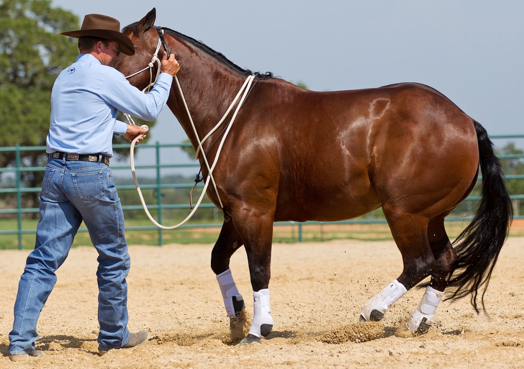 Tap horse's shoulder to encourage movement.