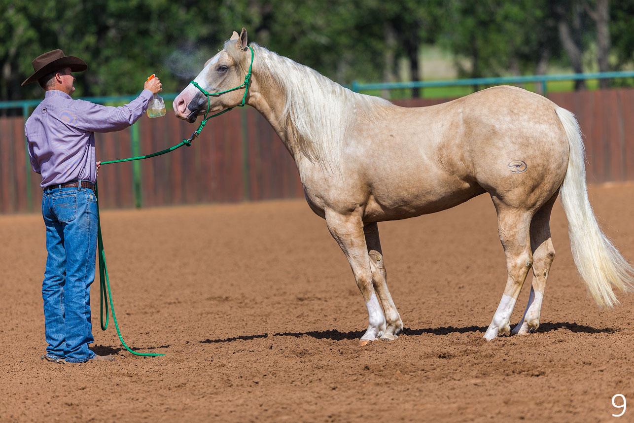 Desensitize Horse's Head to Fly Spray