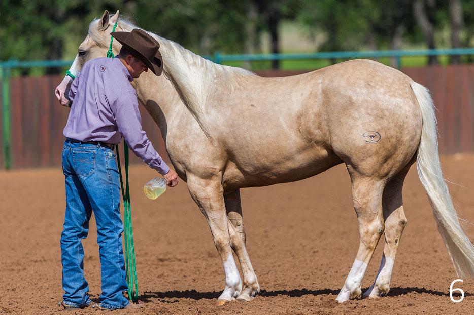 Desensitize Horse's Legs to Fly Spray