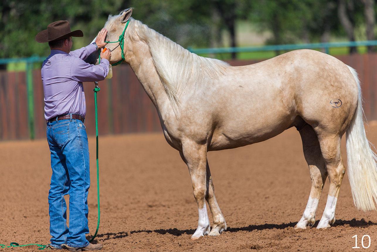 Shield Horse's Eyes to Fly Spray