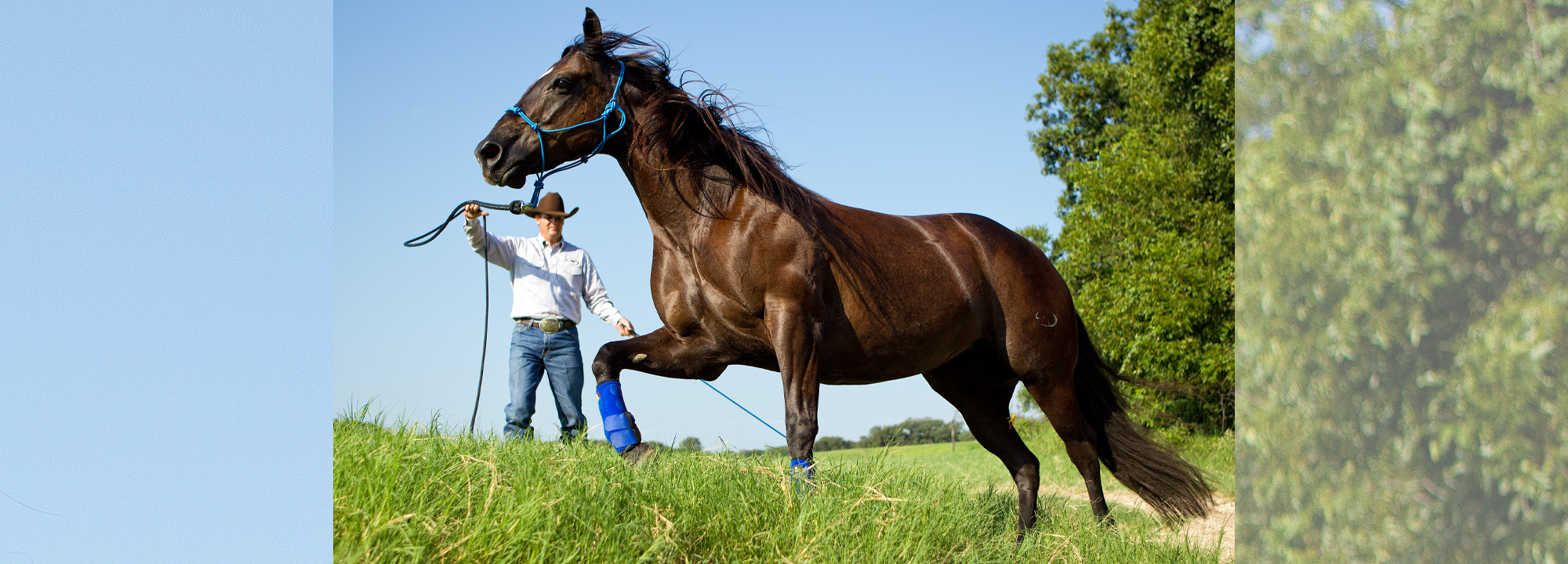 Training Tip: Ask Clinton: A Bit or Hackamore? | Downunder
