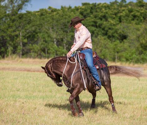 Put horse's feet to work.
