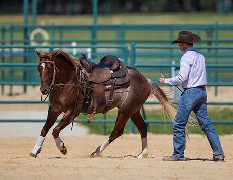Teach Horse the Fundamentals