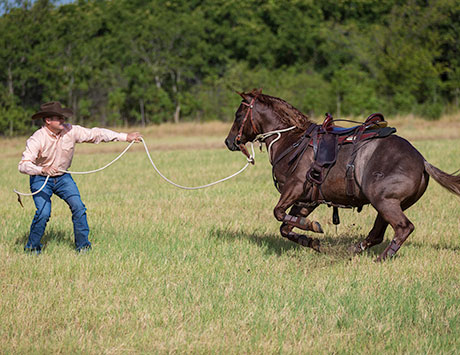 Work with Horse on the Ground