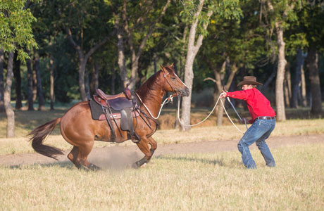 Move horse's feet from the ground.