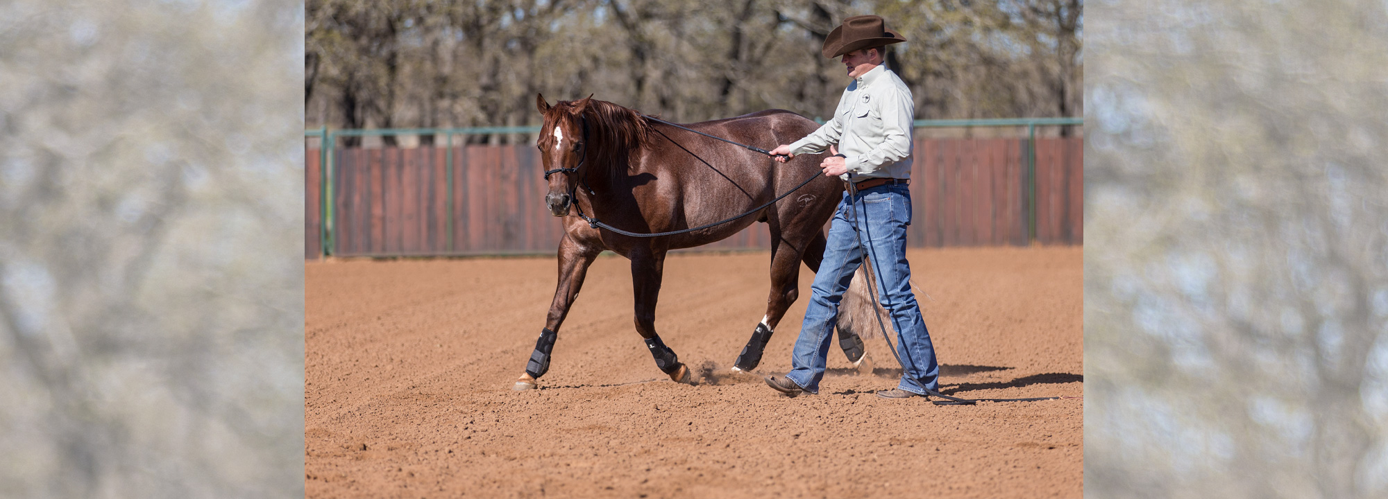 Horse Training Tip Groundwork And Riding Exercises Downunder