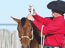 Clip Hair Around Horse's Ears