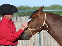 Clip Hair Around Horse's Eyes
