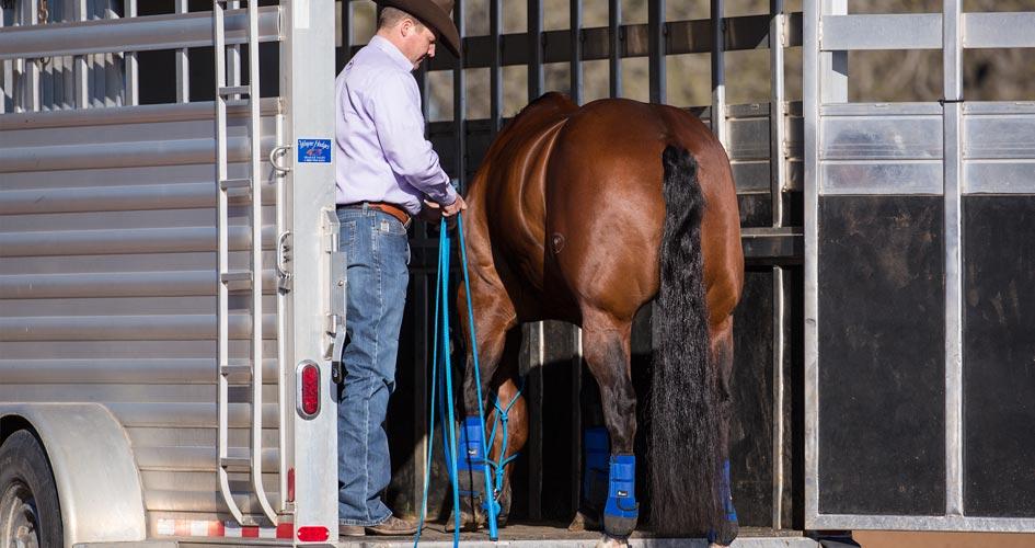 Back Horse off Trailer