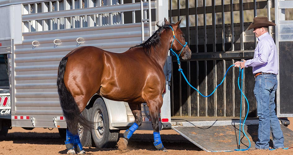 Clinton Anderson Approach and Retreat Method Trailering Horse