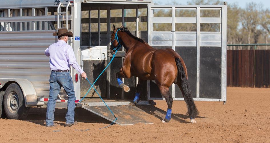 Let horse rest in trailer