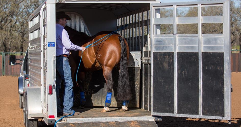 Load horse onto trailer.