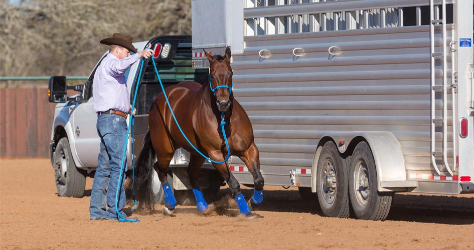 Make sure horse is comfortable around the trailer.